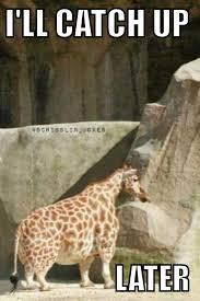Drunk Giraffe Meme - 20 most funniest giraffe meme pictures and photos