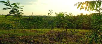 Trees Worldwide 1 Million Trees Project Fairventures Worldwide Indonesia
