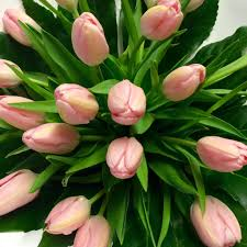 tulips flowers pink tulip bouquet flowers delivery florist wellington nz