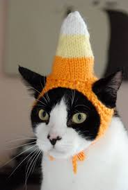 dog candy corn witch costume candy corn cat hat 18 00 via etsy cats pinterest cat