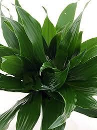 house plants no light low light house plants amazon com