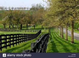 a fence line green grass and trees line a country during