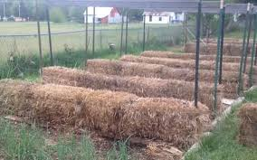 straw bale gardening cindy hoedel u0027s tips for getting the most out