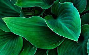 homelife 10 best plants for vertical gardens