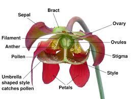 Flowers Information - natural flower plants