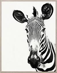 Black And White Zebra Print Bedroom Ideas Tylinek Zebra
