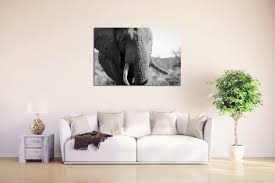 Sofa In South Africa Trek Of The Tusks Rogue Aurora Photography