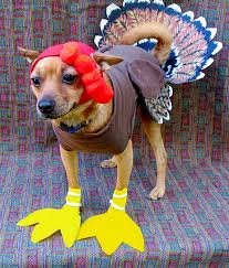 10 adorable dogs dressed up for thanksgiving dresses