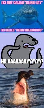 Seal Gay Meme - image tagged in memes homophobic seal shark travelonshark straight