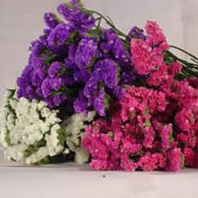 statice flowers gorgeous assorted statice flowers global