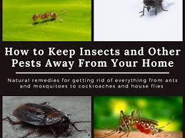 how to clean cupboards after pest home remedies to keep cockroaches lizards ants mosquitoes
