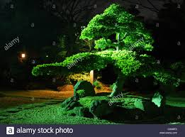 pine tree inside japanese zen garden with scenic night