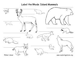 Rhode Island wild animals images Rhode island habitats mammals birds amphibians reptiles jpg