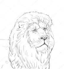 lion king wildlife sketch u2014 stock photo sofiartmedia gmail com