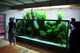 amano aquascape redditpics world renown aquarium builder takashi amano builds