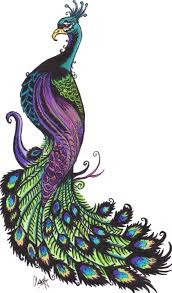 peacock drawing free download clip art free clip art on