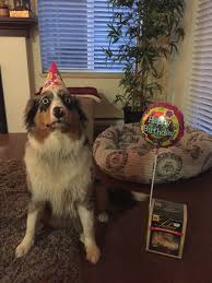 Horrified Meme - my dog is horrified that it s her birthday imgur