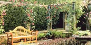 Creating Privacy In Your Backyard Tall Shrubs For Courtyards
