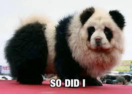 Panda Meme - panda meme nicfletch com