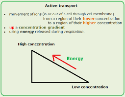 active transport biology notes for igcse 2014