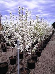 wholesale nursery nurseries in melbourne sydney brisbane