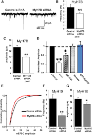 regulation of synapse structure and function by distinct myosin ii