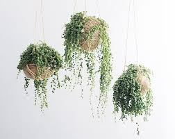 indoor plants the new home obsession idealog