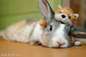 rabbit bunny bunny rabbits images bunny rabbit wallpaper and background photos