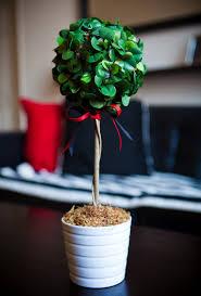 diy tall boxwood topiary inspired by design darling u0026 ballard