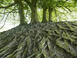 the 25 best tree roots ideas on roots nature of