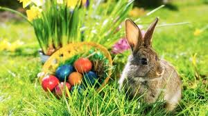 the story of the easter bunny finding easter in bunnies and baskets focus on the family