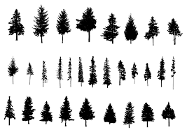 30 pine tree silhouette png transparent vol 2 onlygfx com
