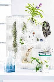 10 unforgettable ideas for displaying indoor plants