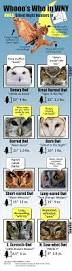 owl infographic pinned by www myowlbarn com homeschooling