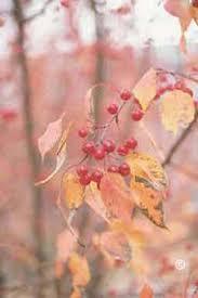 1747 flowering crabapple planttalk coloradoplanttalk colorado