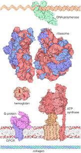 the rcsb pdb u201cmolecule of the month u201d inspiring a molecular view