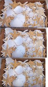 where to buy sand dollars craft shells 3120 bulk box damaged starfish shells sand
