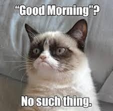 Grumpy Cat Meme I Had Fun Once - grumpy cat memes 50 best grumpy cat memes