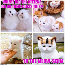 Cute Kitty Memes - kitten garten imgflip
