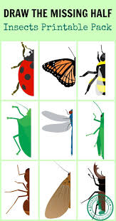 draw the missing half insects writing skills insects and free