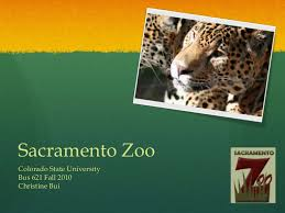 Zoo Increases Sales And Enhances Zoo Strategic Analysis