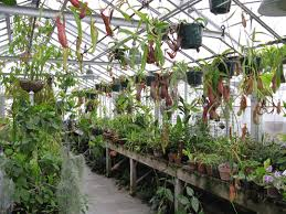 Tropical Plant Biology - biological science biology greenhouse complex