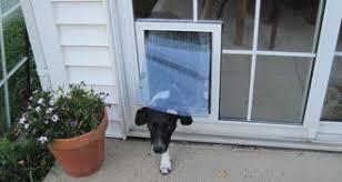 Glass Door With Dog Door Built In by Pet Doors West Edmonton The Glass Guru Of West Edmonton Ab