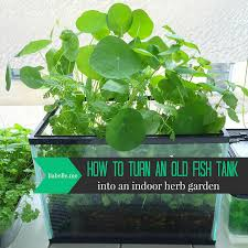 how to turn an old fish tank into an indoor herb garden