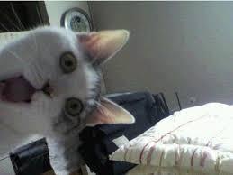 Omg Cat Meme - image 48491 omg cat know your meme