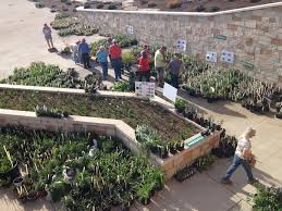 native plants missouri annual plant sale master gardeners of greene county