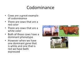 ppt codominance and incomplete dominance powerpoint presentation