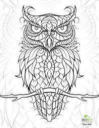 owl coloring pages for adults 224 coloring page