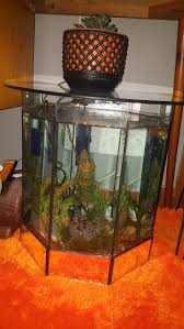 best 25 fish tank coffee table ideas on pinterest amazing fish