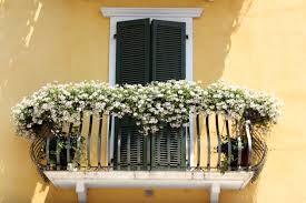free images plant window home italy room interior design